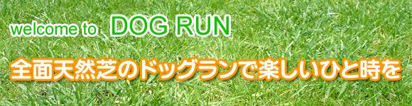 title_dogrun